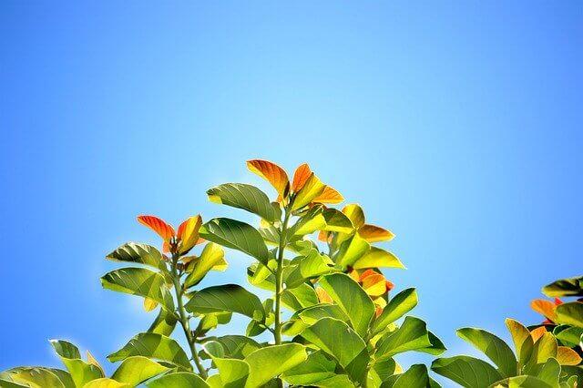晴れてる青い空と葉